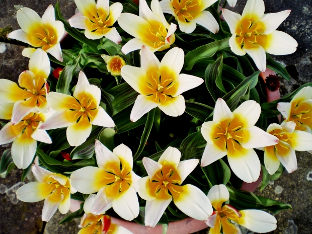 LuxuryHeritageTourscragside tulip pot